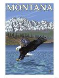 Bald Eagle Diving  Montana