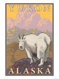 Mountain Goat  Yukon  Alaska