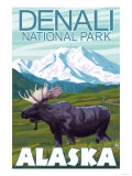 Moose Scene  Denali National Park  Alaska