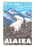 Mountain Goats Scene  Katmai  Alaska