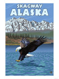 Bald Eagle Diving  Skagway  Alaska