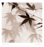 Japanese Maple Leaves II
