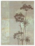 Silver Foliage I