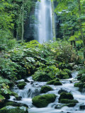 Oirase Valley Waterfall  Fed by Lake Towada-Ko  Aomori  Northern Japan