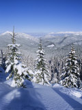 Snow Covered Pines in the Demanovska Valley  Low Tatra Mountains  Slovakia  Europe