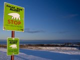 Sign  Polar Bear Alert at Hudson Bay  Churchill  Manitoba  Canada  North America