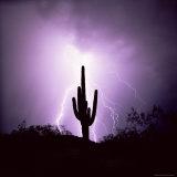 Cactus Silhouetted Against Lightning  Tucson  Arizona  USA