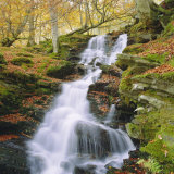 Birks of Aberfeldy  Tayside  Scotland  UK  Europe