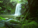 Beauchamp Fall  Waterfall in the Rainforest  Otway NP  Great Ocean Road  Victoria  Australia