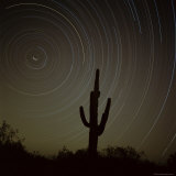 Star Trek Over Cacti  Tracing Stars as They Move Round North Star  Tucson  Arizona  USA