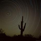 Star Trek Over Cacti  Tracing Stars as They Move Round North Star  Tucson  Arizona  USA