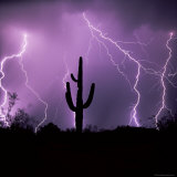 Cactus Silhouetted Against Lightning  Tucson  Arizona  USA