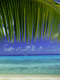 Palm Frond and Beach  Rangiroa Atoll  Tuamotu Archipelago  French Polynesia  South Pacific Islands