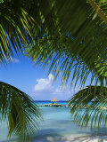 Palm Fronds and Beach  Rangiroa Atoll  Tuamotu Archipelago  French Polynesia  South Pacific Islands