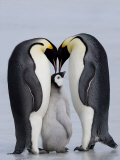 Emperor Penguin Chick and Adulta, Snow Hill Island, Weddell Sea, Antarctica, Polar Regions Papier Photo par Thorsten Milse