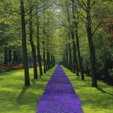 Keukenhof Gardens  Near Amsterdam  Holland (The Netherlands)  Europe