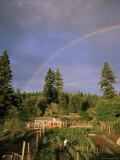 Farmer Tending Organic Vegetable Garden  Vashon Island  Puget Sound  Washington State  USA