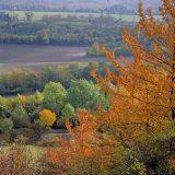 The North Downs  Near Dorking  Surrey  England  UK  Europe