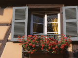 Close-Up of Typical Window with Blue Shutters and Windowbox Full of Geraniums  France
