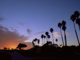 Palm Trees in Silhouette in Park on Bluff Overlooking the Pacific Ocean  Santa Barbara  California