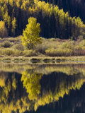 Aspens in Fall Colors Reflected in Crystal Lake  Near Ouray  Colorado