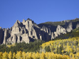Aspens in Fall Colors with Mountains and Evergreens  Colorado  USA