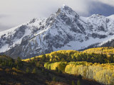 Sneffels Range with Aspens in Fall Colors  Near Ouray  Colorado