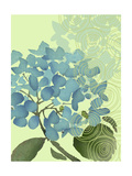 Hydrangea in Blue