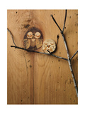 Wood Owl Knots Reproduction photo