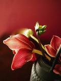 Ruby Tulips Brown Vase