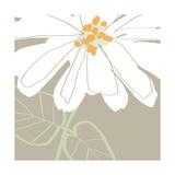 Soft Floral I