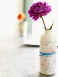 Peony in Vase