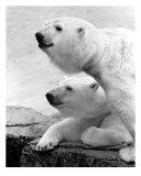 2 Bear Heads