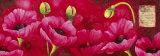 Planche d'Anemones Fushia