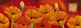 Planche d'Anemones Orange