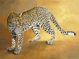 Leopard de Seronera