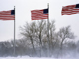 American Flags Blow in a Winter Storm  Washington  DC