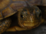 Close View Shows a Box Turtle