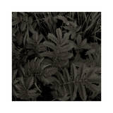 Plantes  c2004
