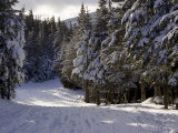 Alpine Ski Trail on Wildcat Mountain