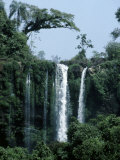 Beautiful Waterfall Surrounded by Pristine Subtropical Rainforest