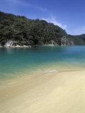 Beach in Torrent Bay  Abel Tasman National Park