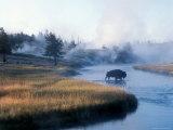 Bison Crosses the Firehole River Flowing Through Geyser Basins, Yellowstone Papier Photo par Michael S. Lewis