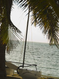 Catamaran and Palm Tree at Waters Edge Sitting on Beach  Ambergris Caye  Belize