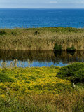 Coastal Marshland on Block Island Sound  Rhode Island