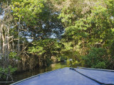 Bow of Blue Boat Moving Through Overgrown Jungle on Belize River