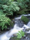 Clean Water Creek Flowing Through Forest Greenery  Alaska