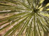 Close Up of Yucca Plant Sedona  Arizona USA
