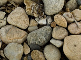 Close-Up of Rocks on a Beach  Block Island  Rhode Island