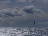 Albatross Silhouette Gliding over the Ocean against Storm Clouds  Australia